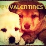Valentine-Day-Glitters